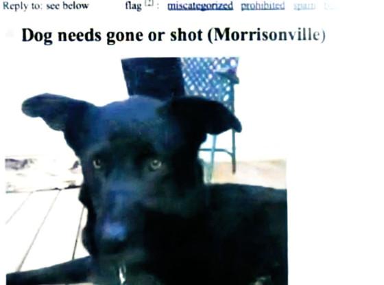 Craigslist Dog Ad