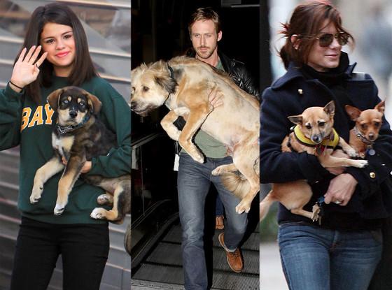 Selena Gomez, Ryan Gosling, Sandra Bullock