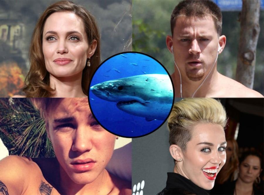 Shark Week and Celebs