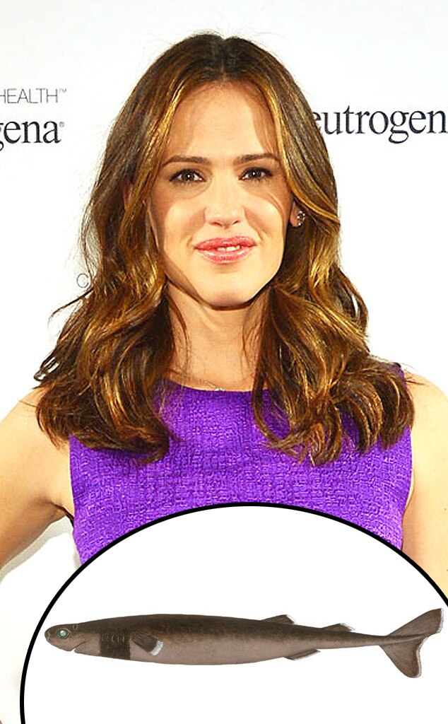 Jennifer Garner, Cookie Cutter Shark