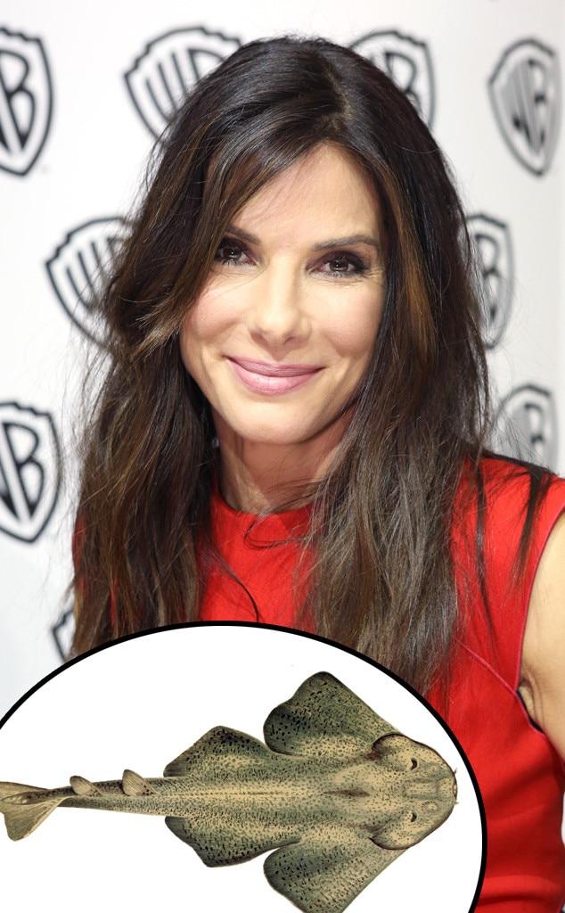 Sandra Bullock, Angel Shark