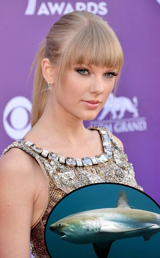 Taylor Swift, Common Thresher Shark