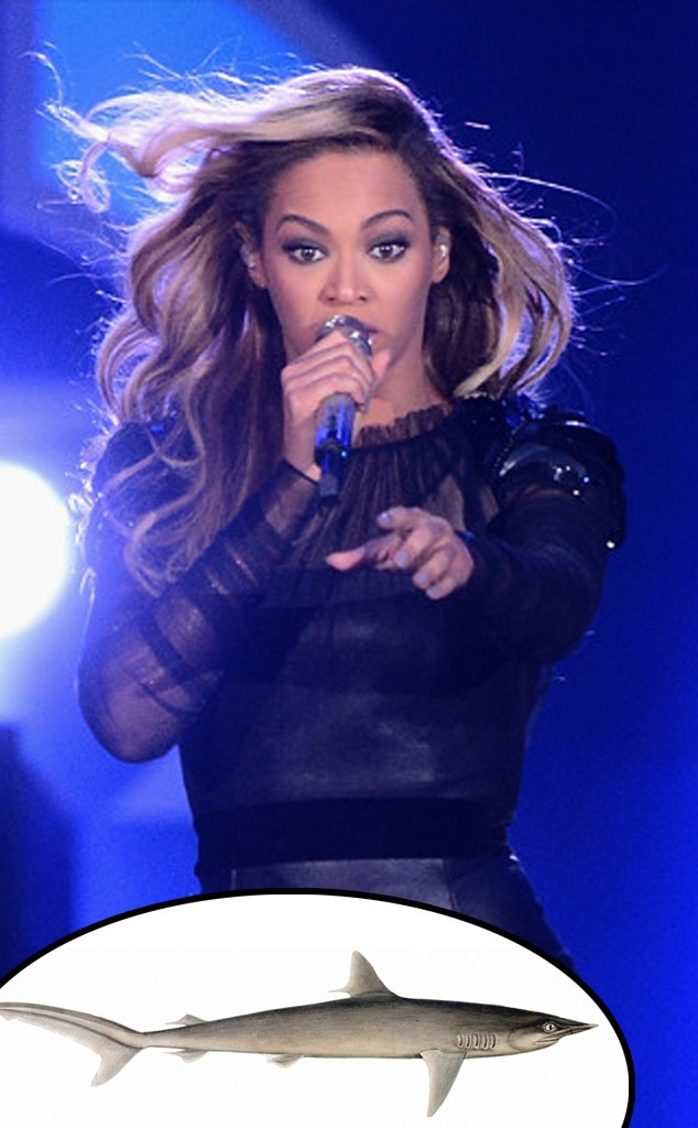 Beyonce, Silky Shark