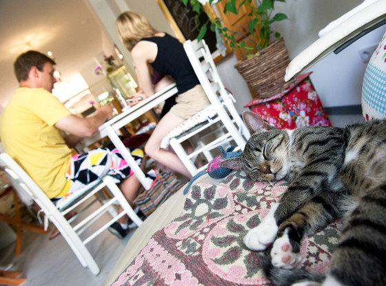 Cat Cafe, Germany
