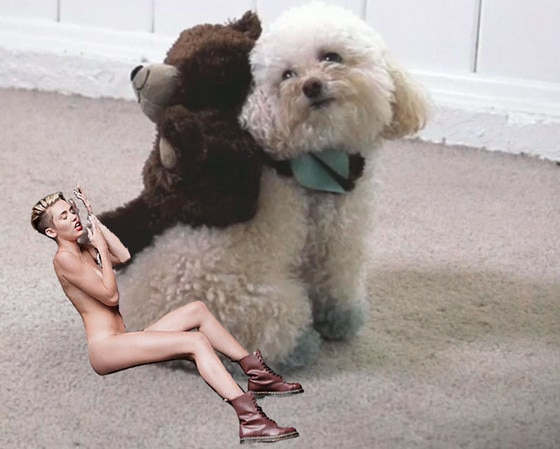 Miley Cyrus, Wrecking Ball Meme, We Can't Stop Dog
