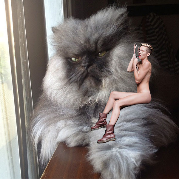Colonel Meow, Wrecking Ball Meme