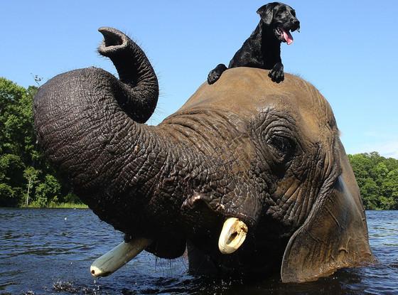 Bubble, Elephant, Dog, Bella