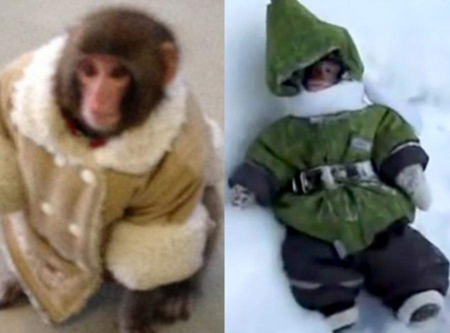 Ikea Money, Russian Hopping Monkey