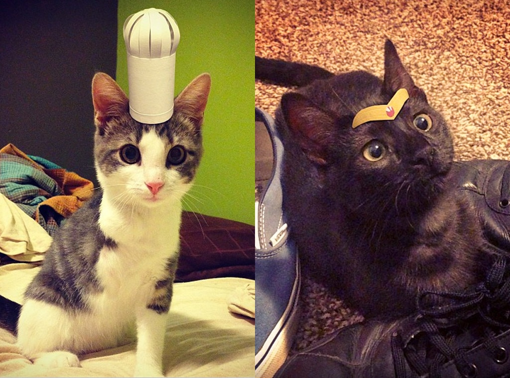 Cats in Hats, Instagram