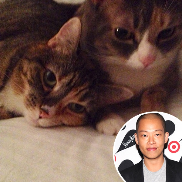 Jason Wu, Cats