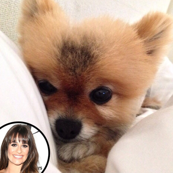 Lea Michele, Dog, Twit Pic