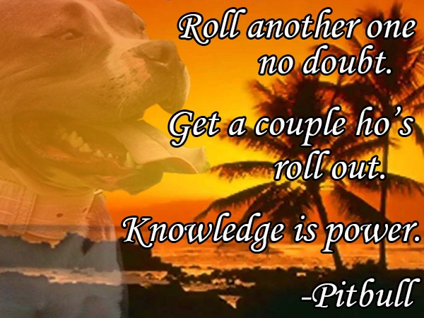 PitBullSchool