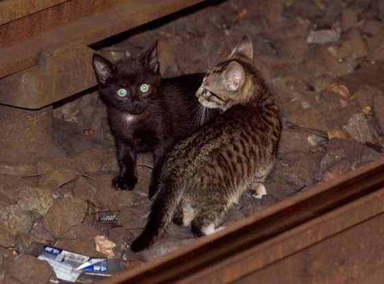 Subway Kittens