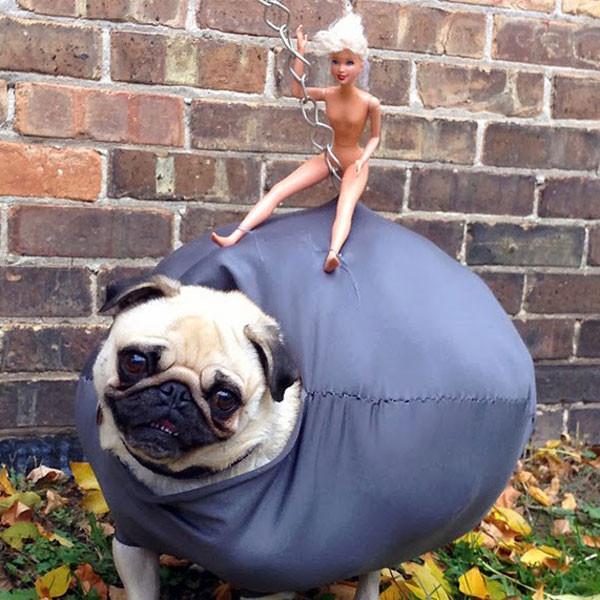 Pug Wrecking Ball Costume