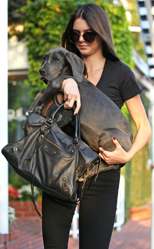Kendall Jenner, Puppy