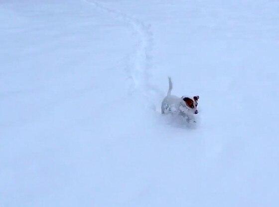 Puppy Snow Plough