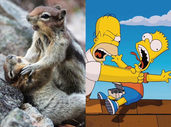 Squirrel Fight, Simpsons