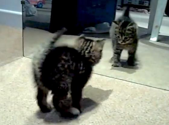 Cutest Kitten Going Crazy
