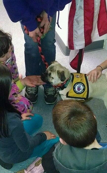 Xander the blind service dog