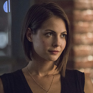 Willa Holland, Arrow