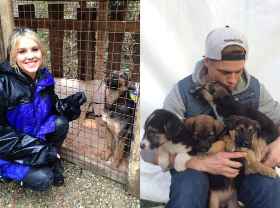 Gus Kenworthy, Olympics, Sochi Puppies