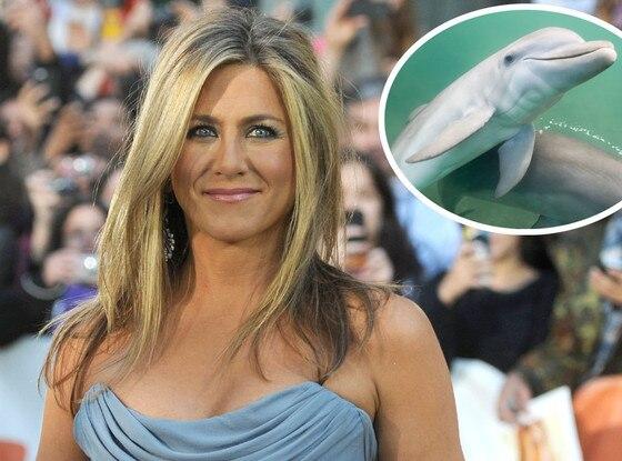 Jennifer Aniston, Dolphin