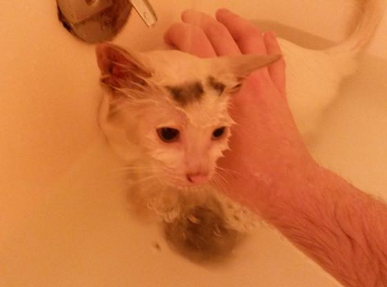 Luna, Rescued Kitten