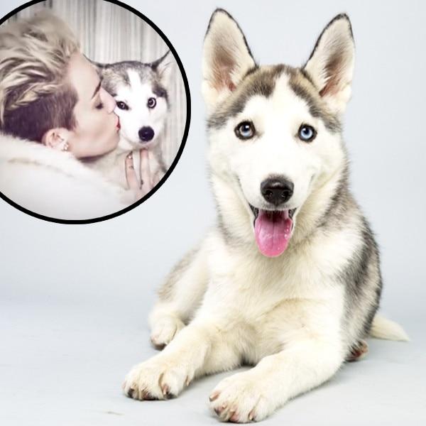 Puppy Bowl, Miley Cyrus