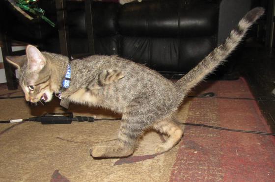 Raising Mercury, Kitten
