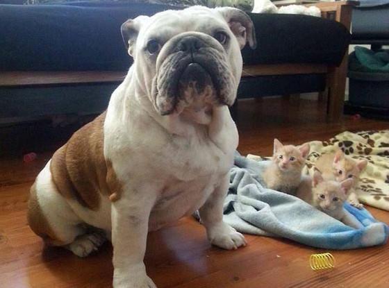 Rorschach Bulldog, Kitten