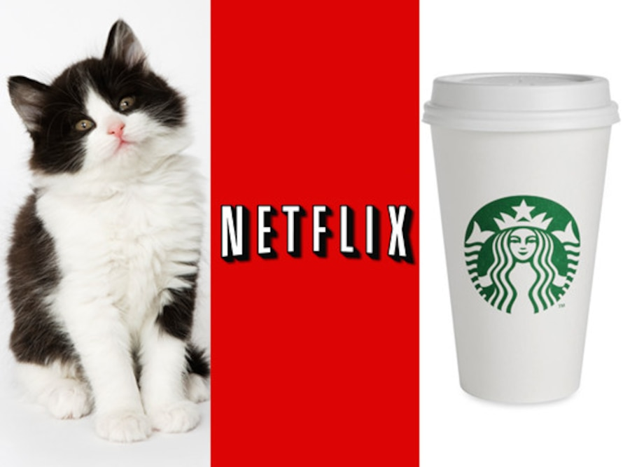 Kitten, Netflix, Starbucks