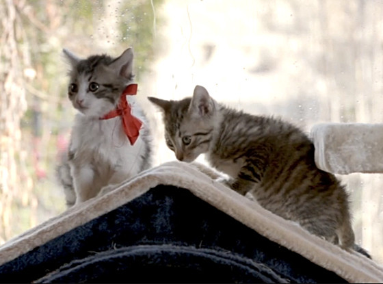 The Notebook, Kittens
