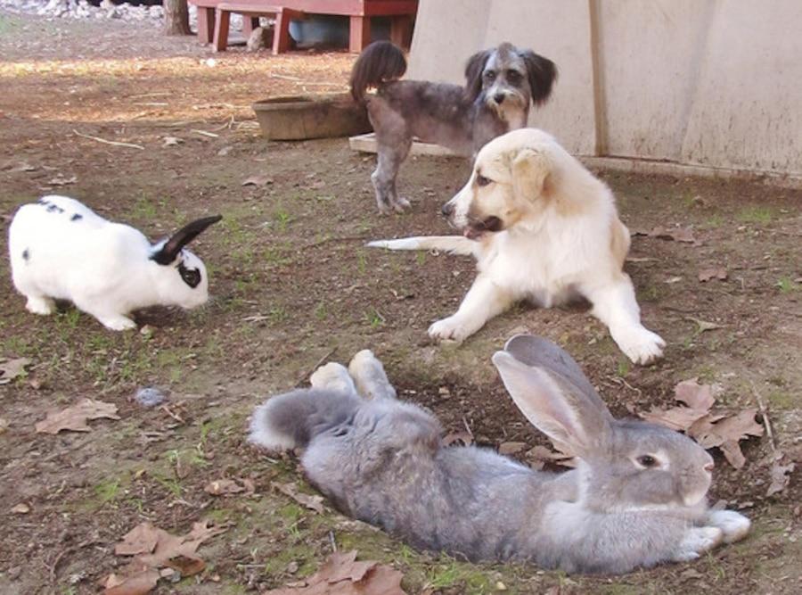 Rocky Ridge Refuge Animals