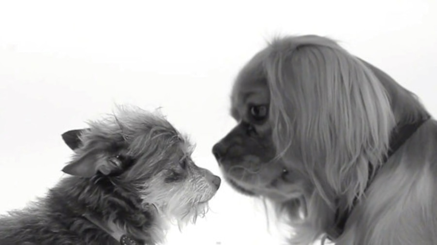 Kissing Dogs