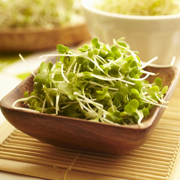 Spring Foods, Broccoli Sprouts