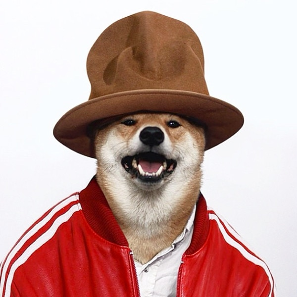 Menswear Dog, Instagram