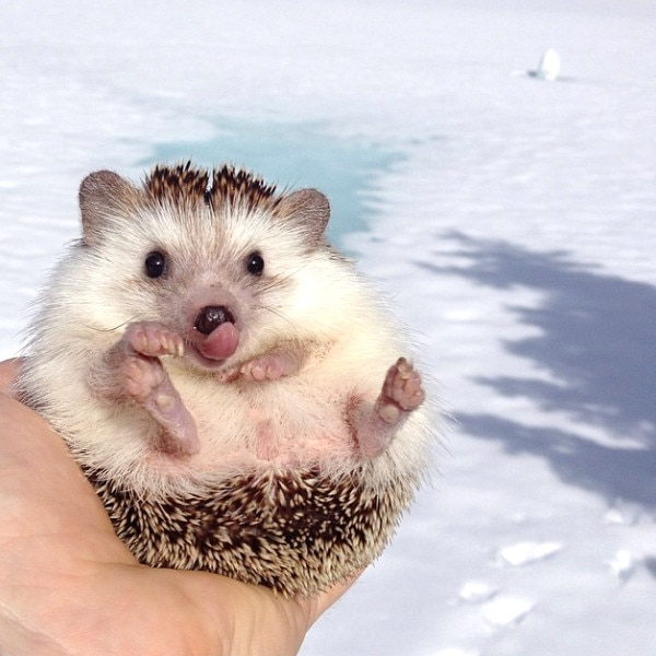 Biddy The Hedgehog, Instagram