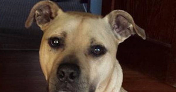 These Dogs Who Were Rescued From Michael Vick S Fighting
