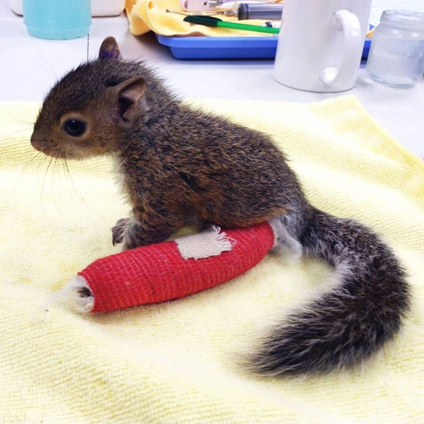 Squirrel Cast