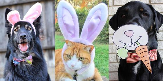 Easter Pets, Instagram