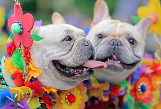 Fiesta Pooch parade