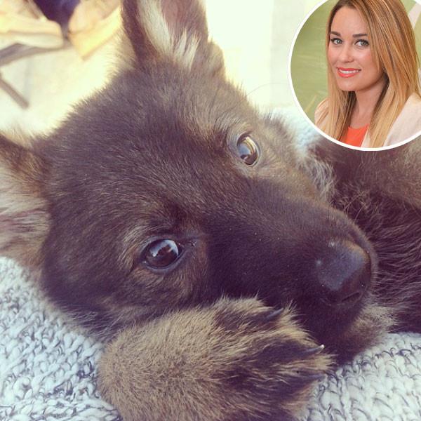 Lauren Conrad, Instagram, Puppy