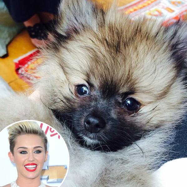 Miley Cyrus, Dog, Moonie