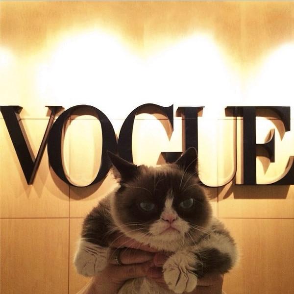 Grump Cat, Instagram
