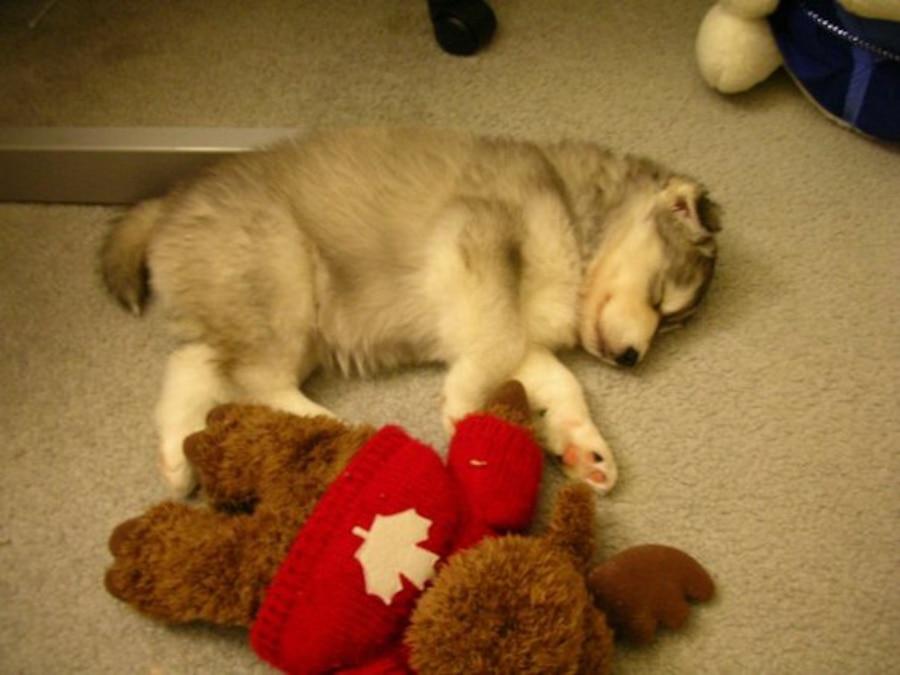 Tally, Husky