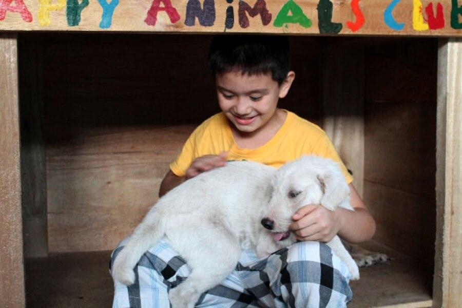 Happy Animals Club, Animal Shelter