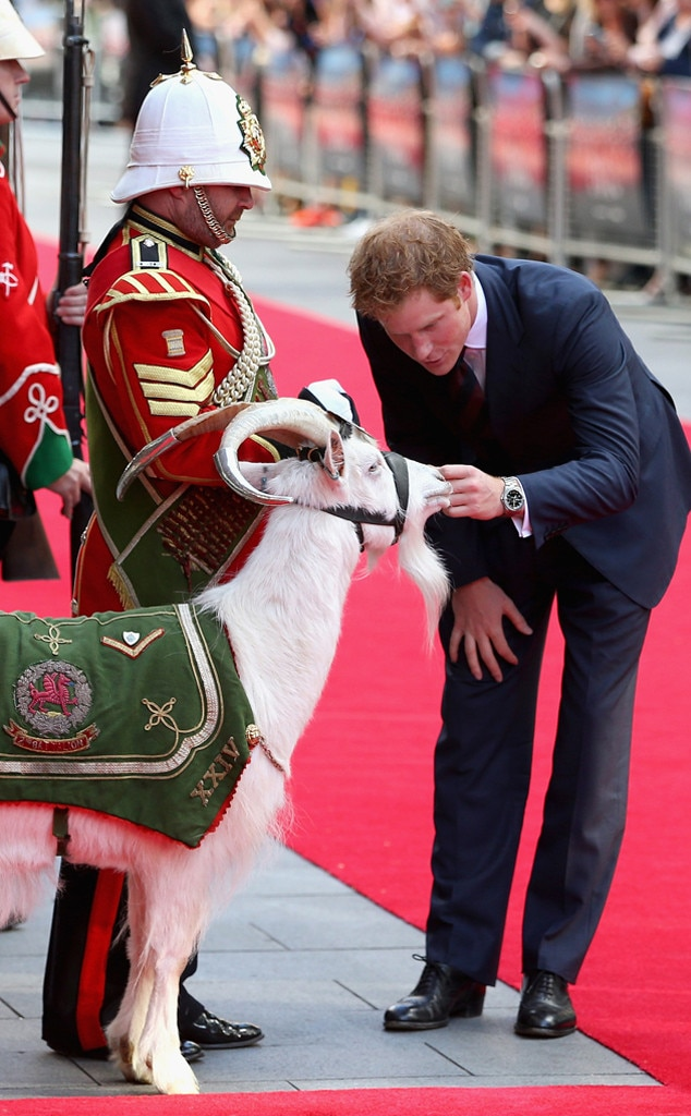 Prince Harry, Goat