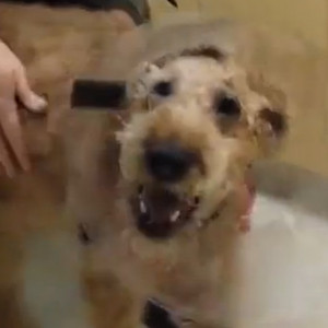 Watch This Formerly Blind Dog React To Seeing His Owners