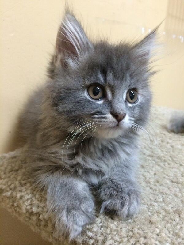 E!'s Cutest Cat