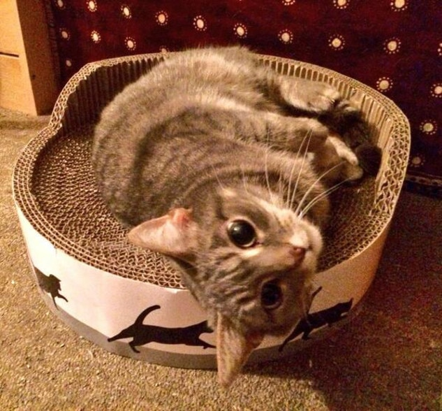 E!'s Cutest Cat